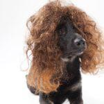 くせ毛を改善する!憧れの髪型にする為の捻転毛の原因と治し方!