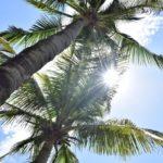 ココナッツオイルとバージンココナッツオイルの違いで頭皮に違いを生む