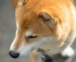 クリアハーブミスト_犬臭い1