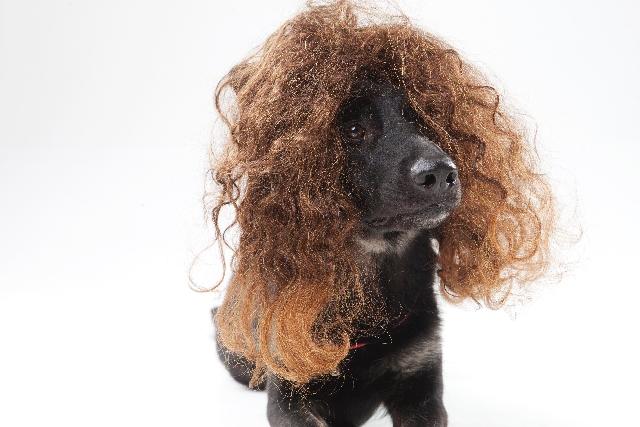 ハーブガーデンはくせ毛を改善できる?成分と実際に使った私の感想_くせ毛